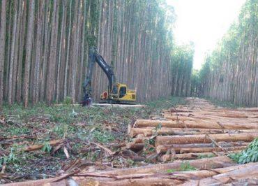 Empleados de empresas forestales de La Araucanía solicitan a la Comisión Interamericana de Derechos Humanos medida cautelar por terrorismo