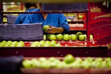 Ministerio de Agricultura de Chile crea comisión para prevenir pérdida de alimentos mediante innovación empresarial