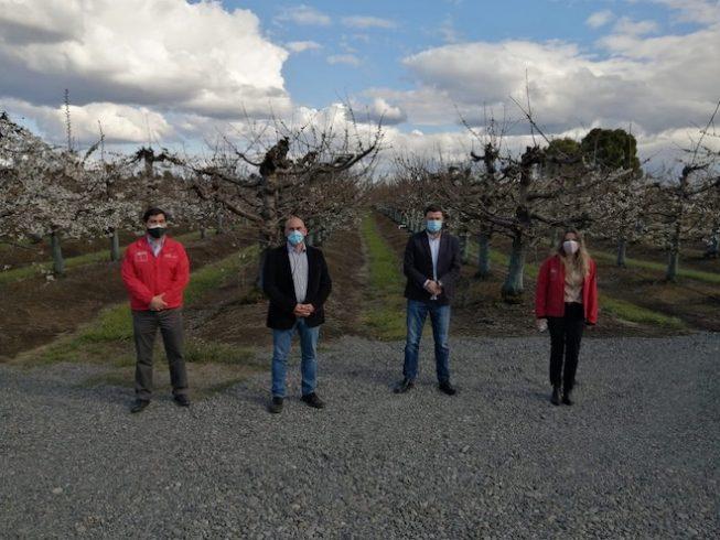 Lanzan inédita Asociación Gremial para potenciar industria de berries en Biobío