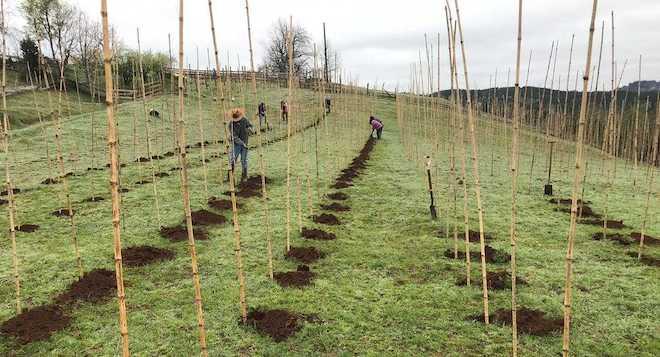 Proyecto agrícola potenciará la producción de uva vinífera en la provincia de Osorno