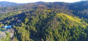 Denuncian robo de madera al interior de la Reserva Nacional Nonguén