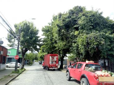 Declaran admisible recurso de protección para salvar árboles de calle Blanco en Temuco