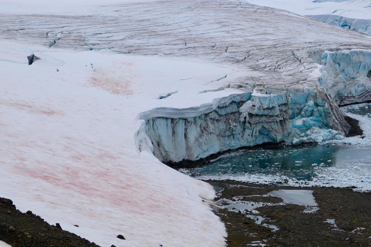 Algas contribuyen a la pérdida de nieve en la península Antártica