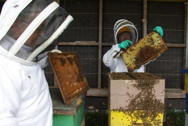 En Cochamó buscan mecanismos para la producción armónica en el rubro apícola
