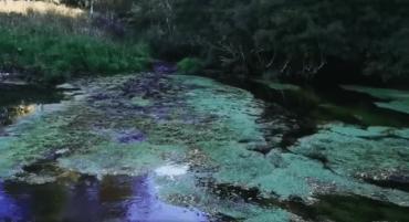 Solicitan investigar intervención en Estero Oyarzo de Puerto Varas