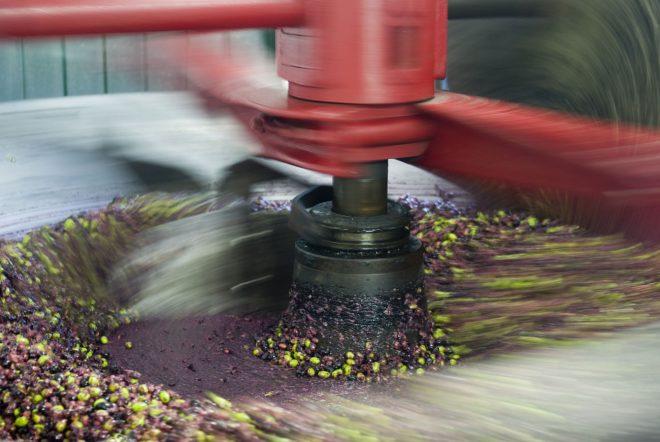 Con residuos de la industria de aceite de oliva desarrollan biocombustibles y carbones descontaminantes en Chile