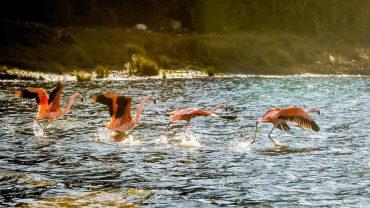 Cuatro nuevos santuarios de la naturaleza se suman al Plan Nacional de Protección de Humedales para Chiloé