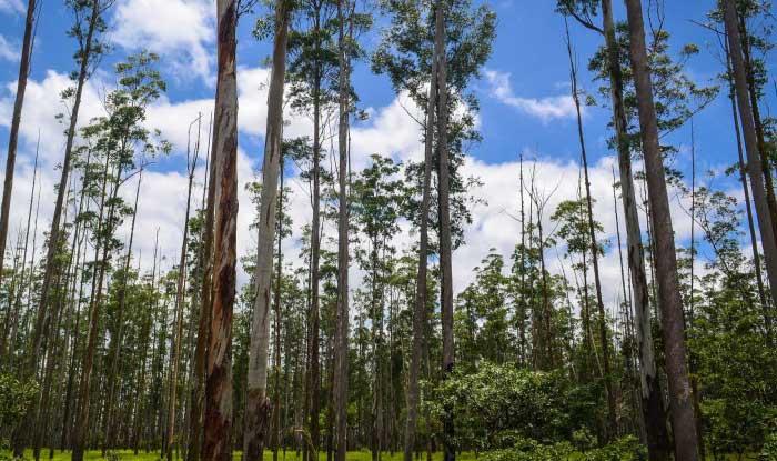 Último plazo para inscribirse en la modalidad online del Censo Agropecuario y Forestal 2021