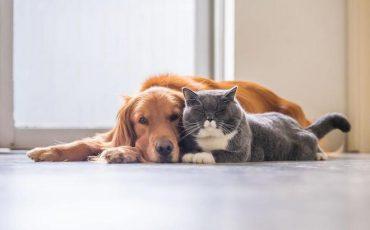A dos años de la obligatoriedad del Registro Nacional de Mascotas en Chile se han inscrito 1.529.576 perros y gatos