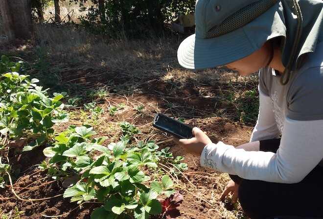 App desarrollada por chilenos permite detectar con una fotografía enfermedades en los cultivos agrícolas