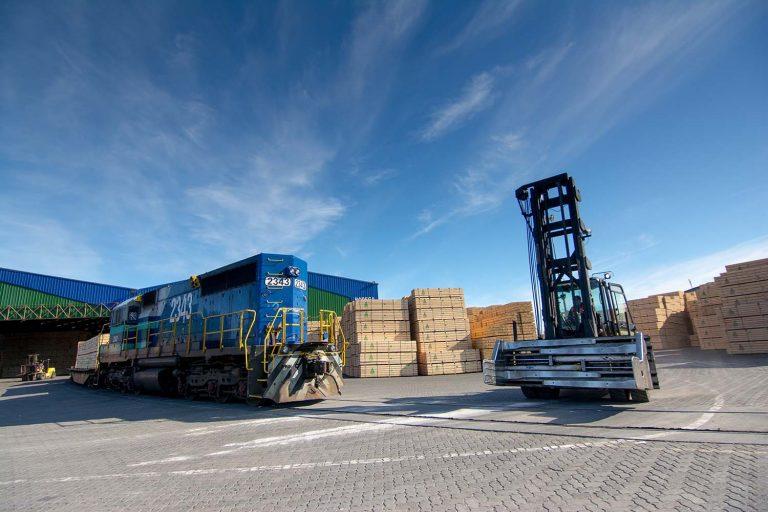 Gremio forestal destaca alza en envíos forestales alertando por impacto de escasez de contenedores
