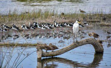 Hasta abril se extiende concurso de fotografía sobre conservación de humedales en Chile