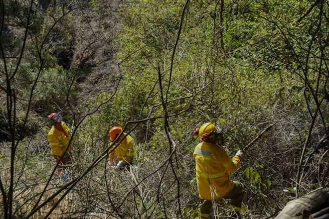 Parque Cerro Caracol y Fundación Reforestemos colaboran para prevenir incendios forestales