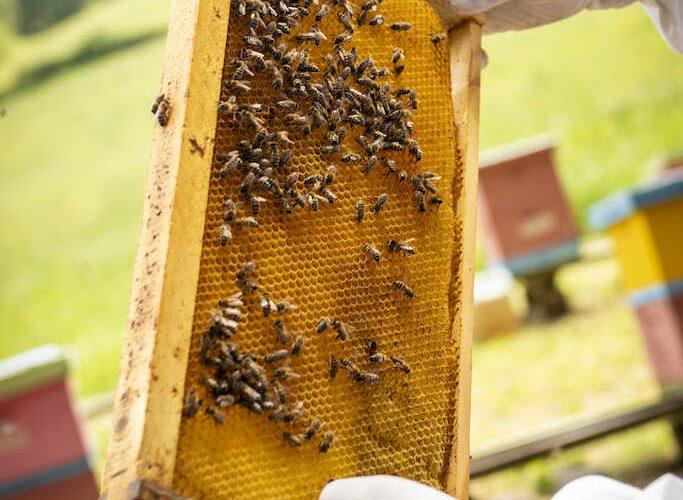 Chiguayante se posiciona como comuna apícola urbana de producción orgánica
