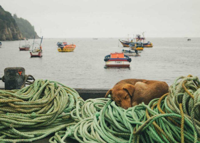 Biobío, Chile: después, siempre, el mar