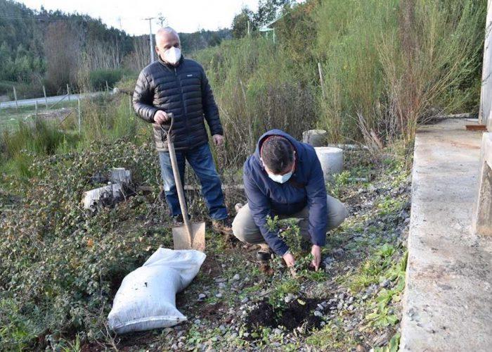 Bienestar Concepción del Poder Judicial planta árboles nativos en predio de Hualqui