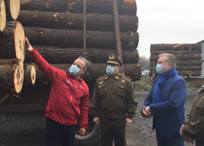 En Concepción Carabineros interceptó cinco camiones con madera robada en la Provincia de Arauco