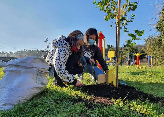 Municipio penquista avanza en desafío de plantar 10 mil nuevos árboles en la comuna