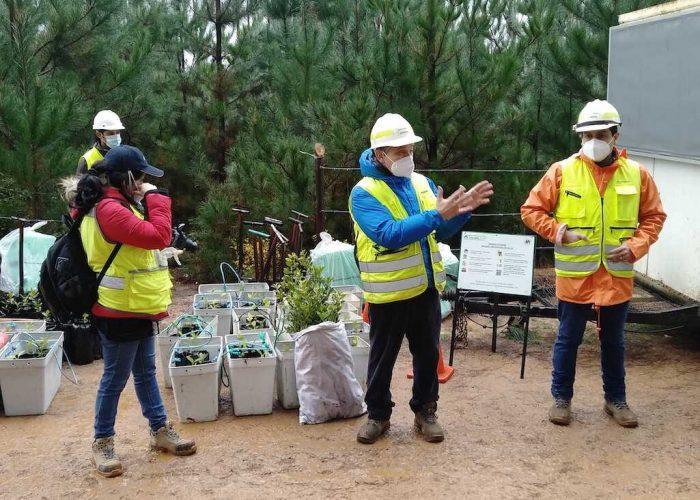 Activa participación de vecinos en trabajo de restauración y plantación de queules en la comuna de Hualqui