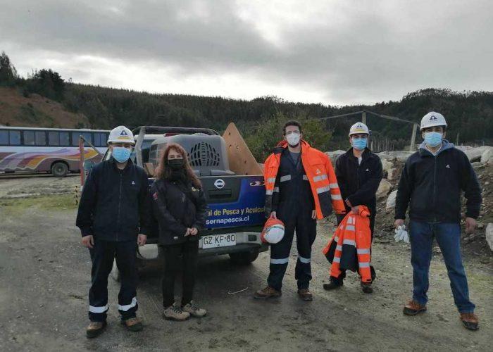 Rescate de lobo marino originario de la Isla de Juan Fernández en Asmar Talcahuano